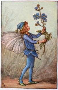 The Speedwell Fairy (smaller size)