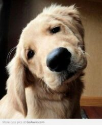 AAAWWW LOOK AT THAT CUTE FACE...