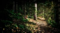The Forest that Weeps (Summer)
