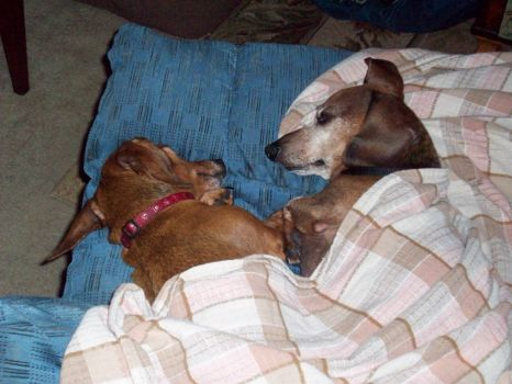 Fritz, on right, Rip May 14, 2013  he was 12 years old.
