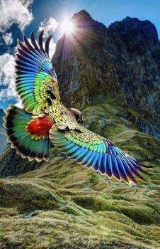 kea parrot of New Zealand