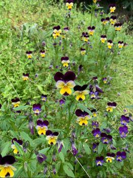 Flowers growing wild