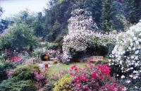 Hugo's garden