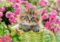 KITTEN IN FLOWER GARDEN