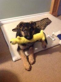 Favorite toy!