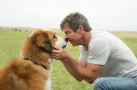 'A Dog's Purpose'