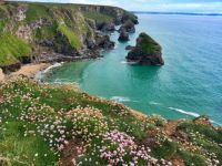 Wildflowers blooming on Bedruthan Steps Beach cliff in Cornwall, England