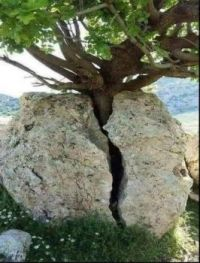Paper beats rock, or the persistence of life