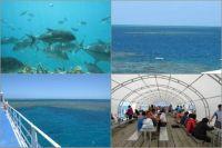 Snorkelling trip to Moore Reef - Cairns
