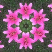 Kaleidoscope 51 just lilies small