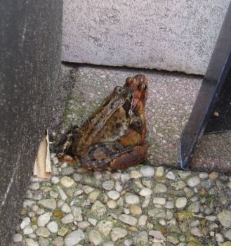 This' what happened in my backyard!!!Toad... in duplicate!!:))