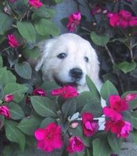Lily Rose at 8 weeks