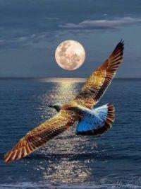 Sameeh Mostafa Beautiful  World