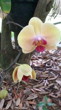 My Pretty Orchid