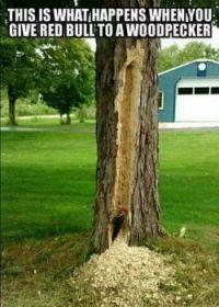 Woodpecker :-)