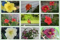 Flowers Around My House and My Friendly Robin