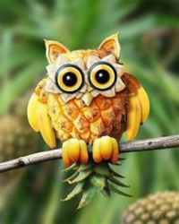tropical owl