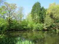 Lakeside scene in East Sussex