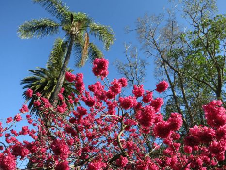 Palm and pink flowers