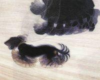 Dynamism of a dog