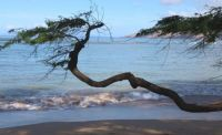 The Branch and the Sea
