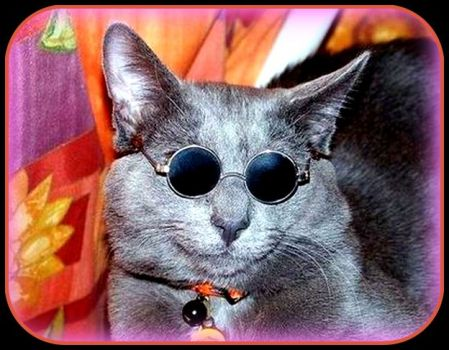 ANCIENT HIPPY's cat?