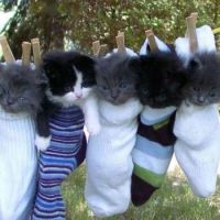 "Yeah, it really ""socks"" :)"