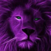 Purple lion pretty green eyes