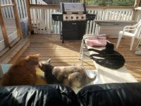 3 cats on catio May 2019