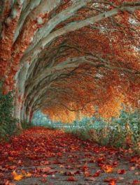 Tree tunnel in Essen, Germany       Magical Adventures FB   futureworldblogger