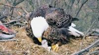 We Have A Baby Eagle