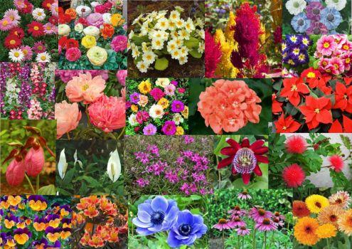 Flowers P