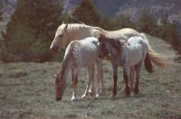 2002 CLOUD AND Part of his family