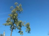 Blue sky with tree