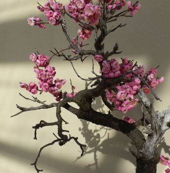 Bonsai Tree with Flowers