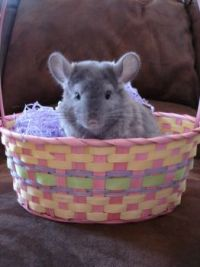 Easter Chilla