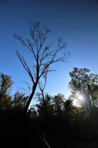 A dead tree: my favorite photographic subject