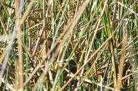 Find the bird!!