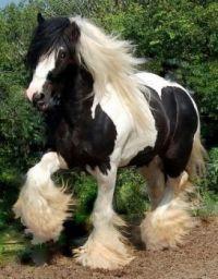 Cathy's Stallion