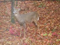 back yard visitor