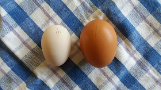 Dorking egg, and Hyline egg