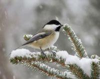 Snow storm Dee