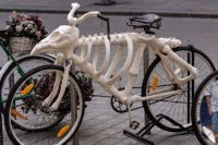 an unusual bike