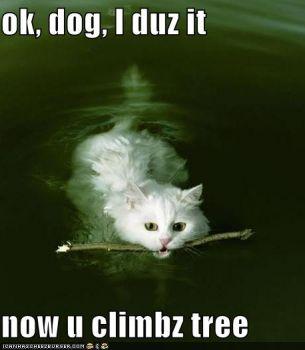 CUTE KITTY #1...