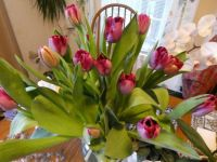 Lovely Tulip Bouquet