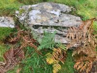 Autumn ferns at Aber Falls