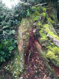 Tree Trunk Art II