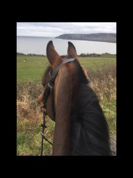 Arabian stallion looking out to sea at robin hoods bay, North Yorkshire, uk