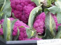 Gorgeous purple cauliflower, 88 pieces