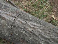 more woodpecker holes